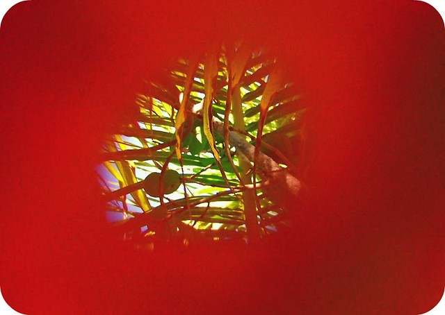 Through the Hole in the Big Red Leaf