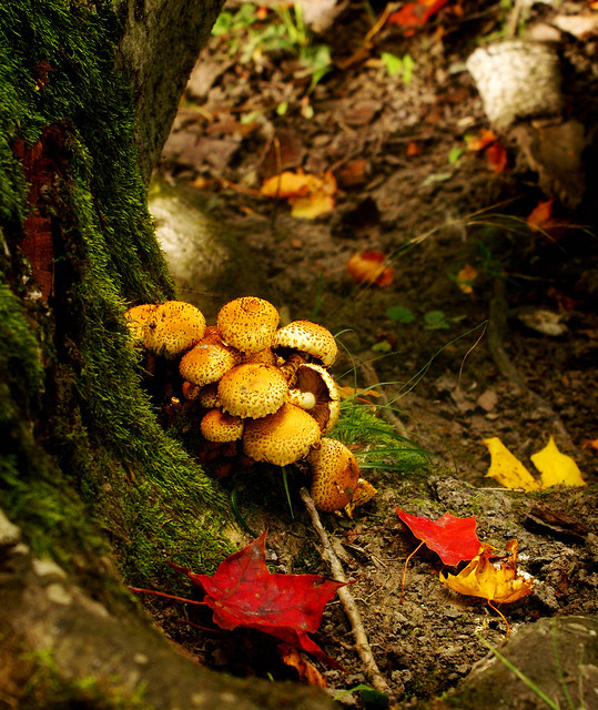 Mushrooms in a really autumnal landscape