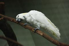 Parrot 鸚鵡  by air maxx