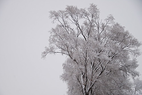 Monday's Snowy Trees | by nataraj_hauser / eyeDance