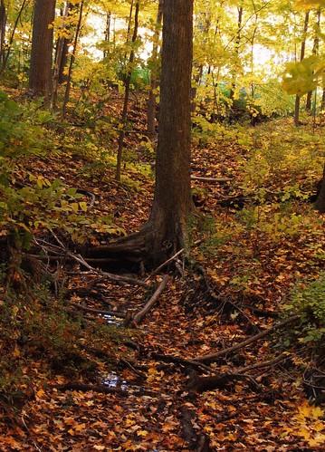 autumn red orange tree green fall colors leaves yellow woods magic roots treetrunk bark trunk mortonarboretum 茶具 natureandnothingelse seasonaldifferences