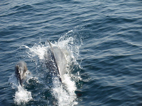 Mama and baby dolphin | by cybele-