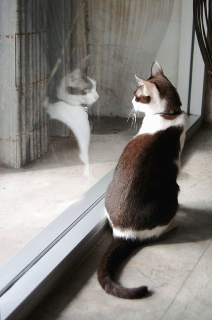 une chatte et son reflet I (cat and its reflection I)