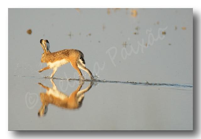 Correndo sobre as águas (Running on water)