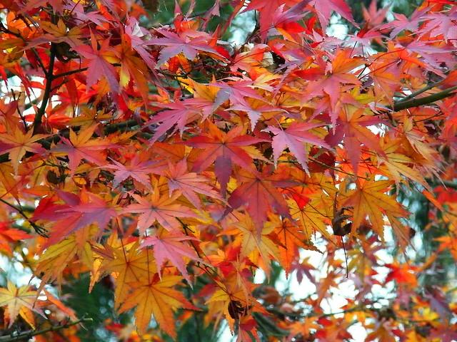 Xian Autumn