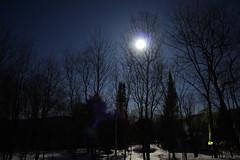 Moonlight Flare