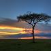 Image: Mara Sunset