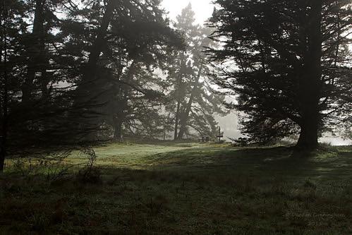 park trees newzealand mist beautiful misty pine forest bench table outdoor scenic reserve nelson olympus bbq southisland barbeque dappled conifer parkland rabbitisland em5 roughisland tasmandistrict microfourthirds duncancunningham ilobsterit duncanmc42
