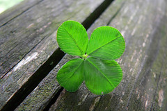 Luck is... (explored) | by kaibara87