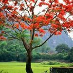 Hoa Lu, Ninh Binh Province