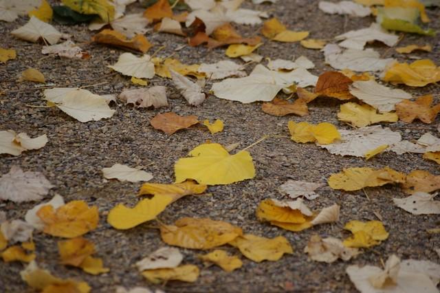 The golden leaf