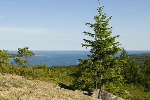 ocean lighthouse tree view pigeon hill maine spruce petite manan steuben