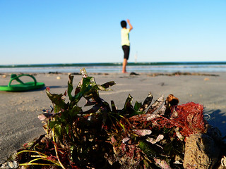 Beach life   by Jaycee1