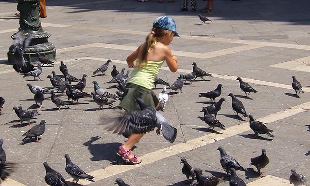 Venedig - Tanz mit den Tauben, 7238