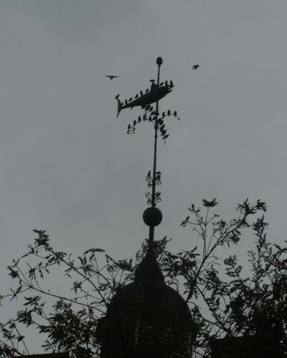 Birds on a fish Fish weather vane, Lewes. Lewes circular via Rodmell
