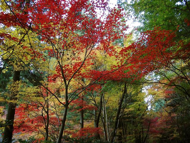 Autumn tint 07