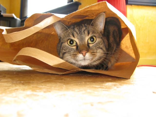 Kat in de zak