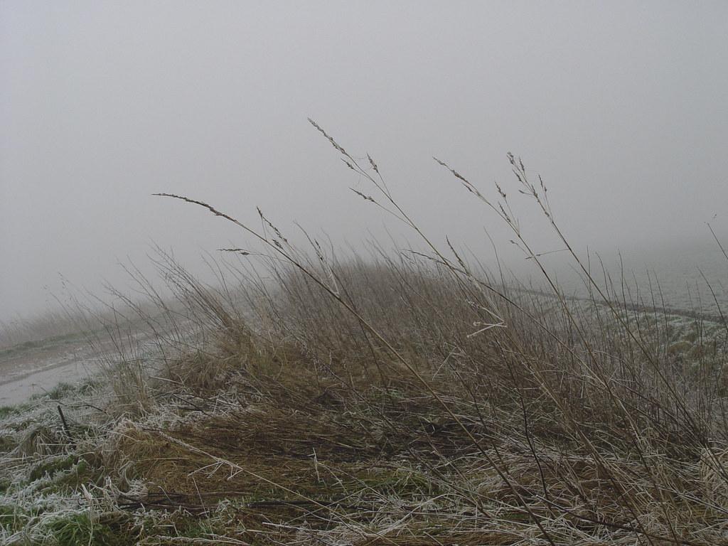 Lithergraaf in de Mist met riet.