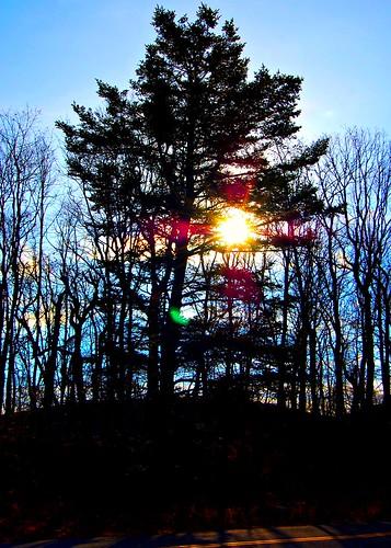 trees sunrise picnik mtpenn