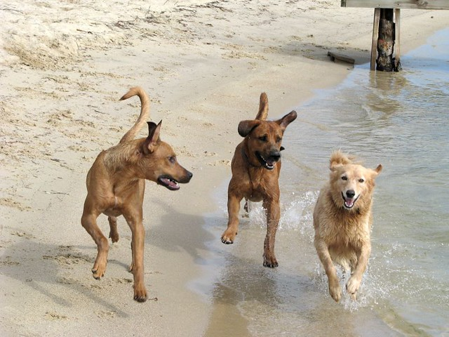 Dogs know how to have fun