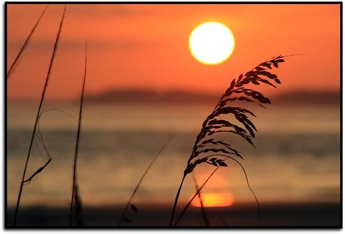 sunset sea orange sun beach sc water golden warm december bokeh oats 2008 southbeach shilouette hhi hiltonheadisland img2475 cmwdorange goldstaraward