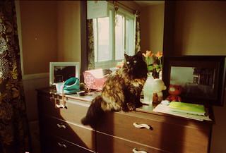 cat Shura | by moonstream