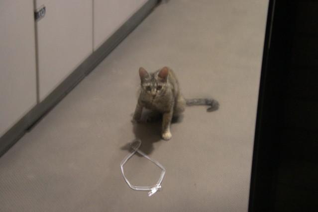 Today's Cat@20080813