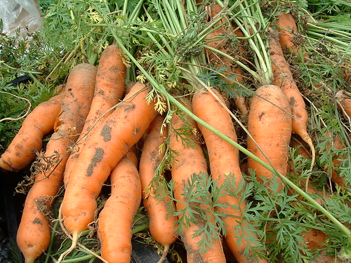 Carrots harvested | by Nick Saltmarsh