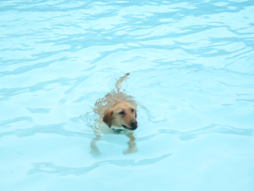 Swimming! | by Erin Rupe Sweeney