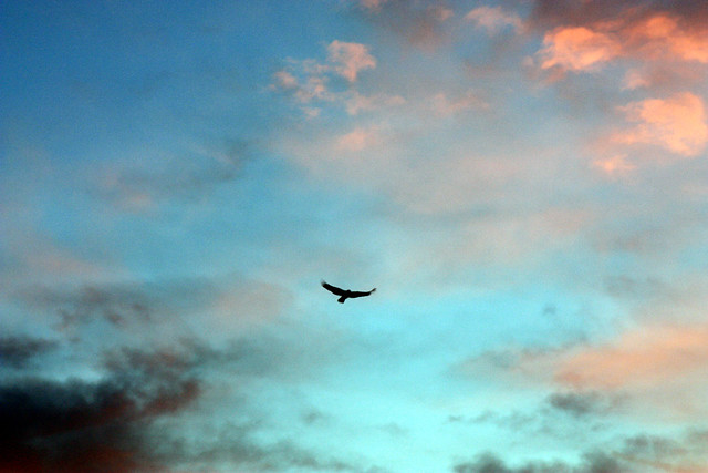 Volo libero