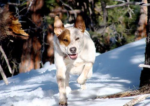 dog snow santafe fun hike sos purejoy weareblessed blueribbonwinner theunforgettablepictures