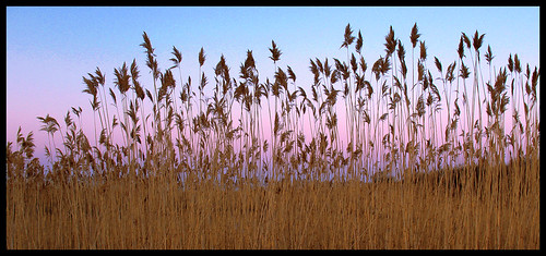 reeds evening fantastic dusk massachusetts northshore rockport canona630 flickrlovers