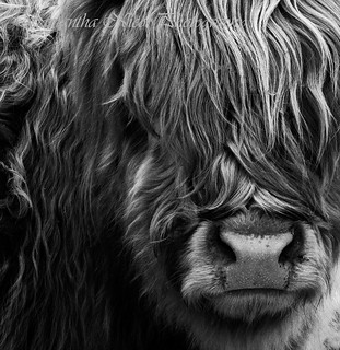 Hairy | by Samantha Nicol Art Photography