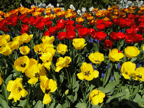 Skagit valley Tulip festival                                              DSC01021