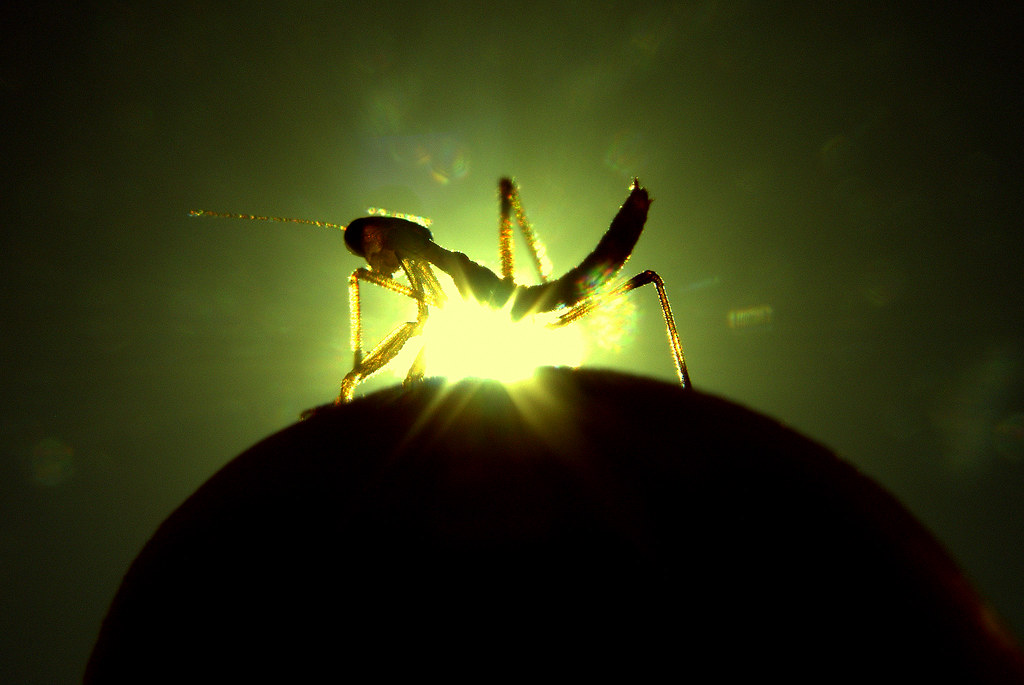 newborn praying mantis baby