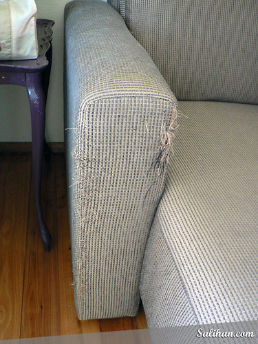 Before - Cat Scratched Sofa | by :Salihan