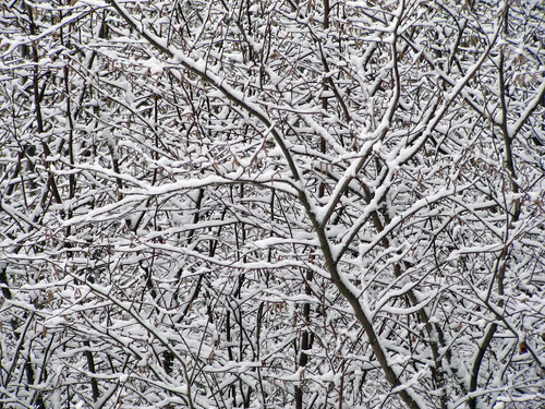 trees white snow abstract tree nature forest woodland washington woods branch pattern branches wa canons3
