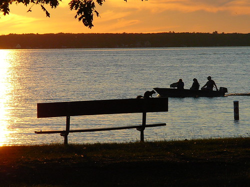 sunset silhouette bench landscape squirrel michigan cadillac lakemitchell lakemitchel