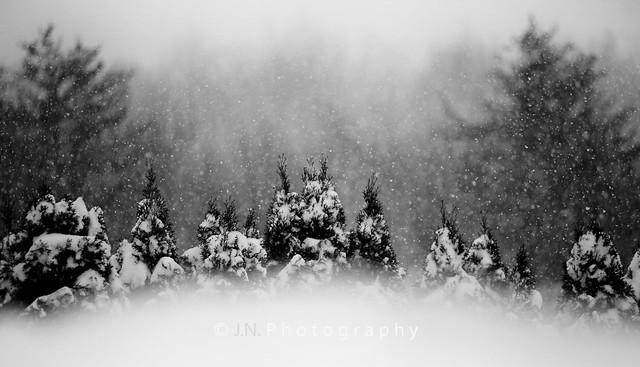 Reason for Loving Winter