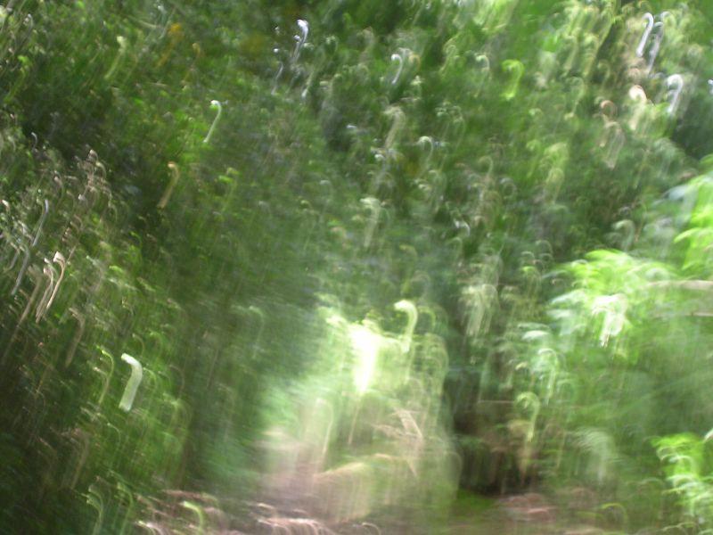 Its raining walking-sticks Milford to Godalming