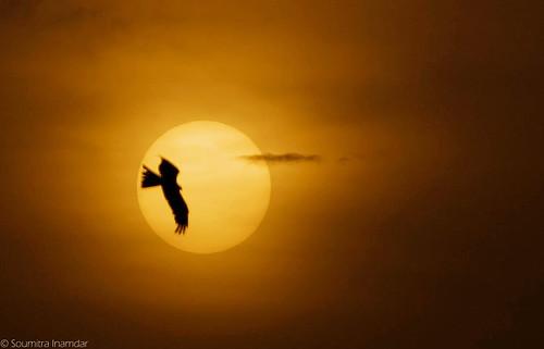 sunset sky sun kite bird pune thepca naturesfinest soumitra inamdar soumitra911 pptadka20080723 pptadkawinner pcaorange