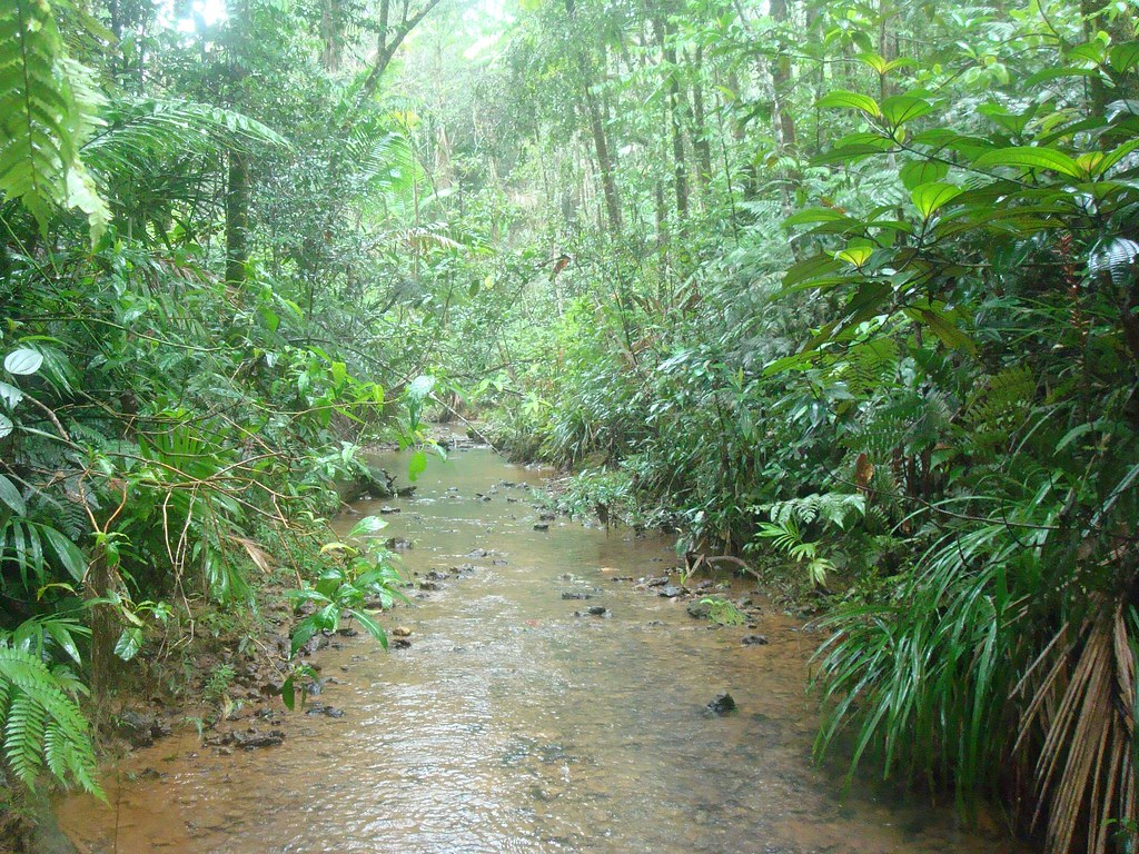 Rio Patillas In The Bosque Carite The Real Thing This Is Flickr