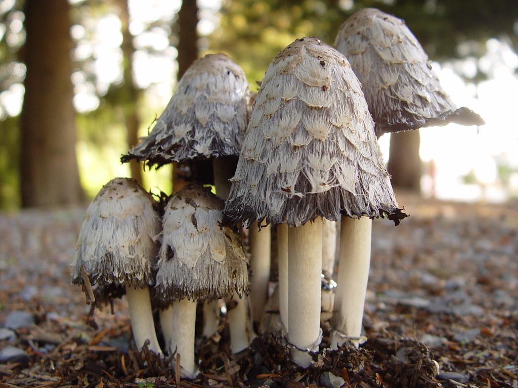 Magic Mushrooms? NOT