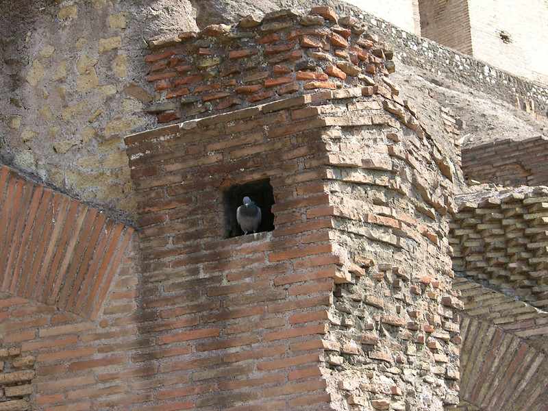 Pigeon coop in the Coliseum