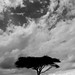 20081125 Best of Africa