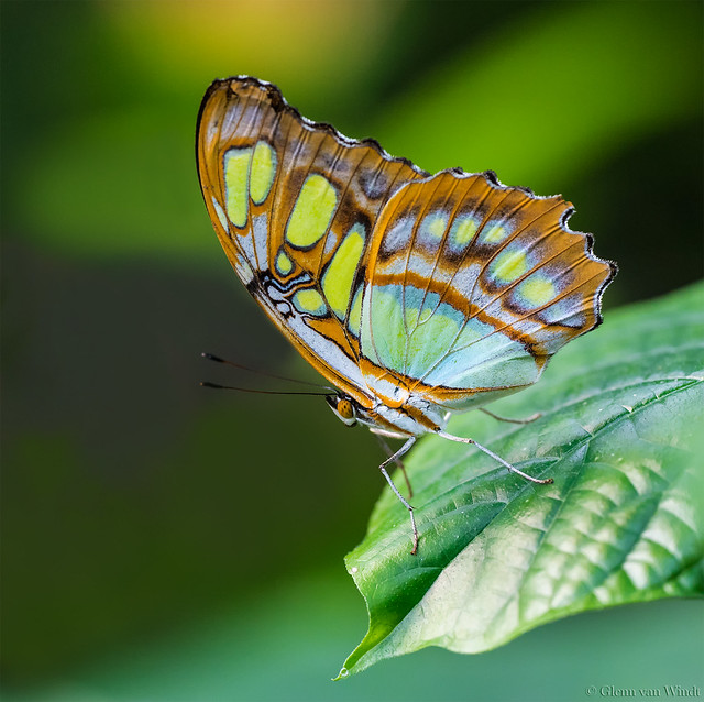 Malachite's colors...