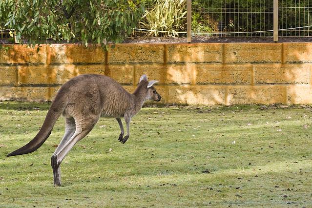 Image result for caversham wildlife park fee