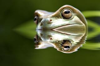 Froggy Phelps