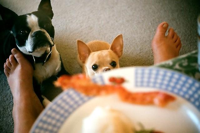 bacon for breakfast