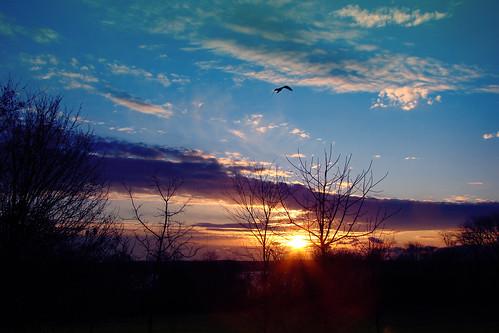 bird sunrise rhodeisland